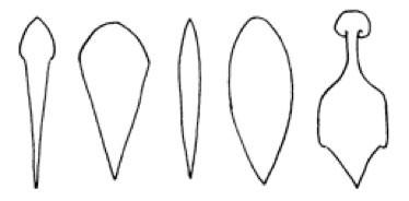 Niektoré tvary ridgu u TRD: