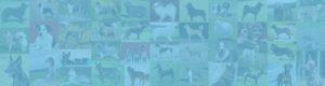 Klub chovateľov málopočetných plemien psov, Slovensko